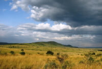 A Kenya Wildlife Safari