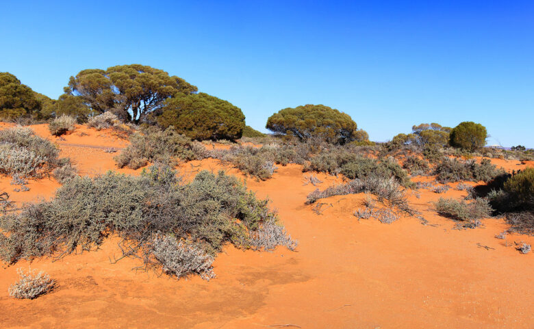 A Holiday In Australia - Australian Outback